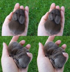 A handful of love.