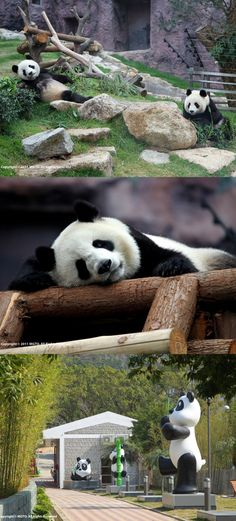 Love pandas? You'll want to visit Macau's Giant Panda Pavilion! #WowMacau