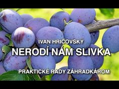 Ivan Hričovský: Nerodí nám slivka - YouTube Gardening, Youtube, Ideas, Lawn And Garden, Thoughts, Youtubers, Youtube Movies, Horticulture