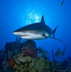 Add your name now and urge Congress to ban the sale and trade of shark fins in the United States – Keep these vital creatures out of the international fin trade >>http://act.oceana.org/sign/Congress_shark-fin-ban_2016?source=mailing&utm_source=mailing&utm_medium=email&utm_content=sharks&utm_campaign=20160628sharkfin&akid=8251.834929.d6BMfx Thank you for helping to protect sharks from shark finning in the U.S.! Can you support Oceana's work by making a donation today?