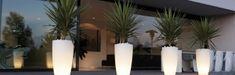 Yukka plants reminiscent of Miami palm trees. Lit pot plants.