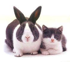 RT @bunnybuddhism: In trying to be like another bunny, I fail to learn how to be myself.