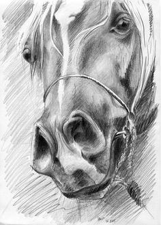 Chrapy - Magdalena Muraszko-Kowalska - Zeichnungen - I love Animal :) Horse Head Drawing, Horse Pencil Drawing, Pencil Drawings Of Animals, Horse Drawings, Cool Art Drawings, Animal Sketches, Realistic Drawings, Art Drawings Sketches, Drawing Drawing