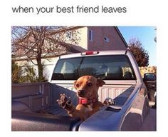 It's truly depressing when I've gone a whole thirty seconds without my BFF. Really Funny Memes, Stupid Funny Memes, Funny Relatable Memes, Haha Funny, Hilarious, Funny Stuff, Funny Things, Bff Quotes Funny, Random Quotes