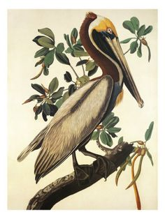 Artwork by John James Audubon. I am loving it for some reason. I could see like two of these looking great on my bathroom walls.