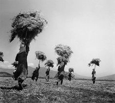 Hay transfer, Larisa, Greece, 1948 - by Τakis Tloupas - Greek Greece Photography, Art Photography, Vintage Pictures, Old Pictures, Greece History, Old Time Photos, Greece Pictures, New Years Wedding, Greek Culture