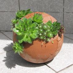 Tikin svet: keramika
