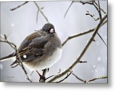 Dark-eyed Junco #Metal Print by Christina Rollo.  All metal prints are professionally printed, packaged, and shipped within 3 - 4 business days and delivered ready-to-hang on your wall. Choose from multiple sizes and mounting options.