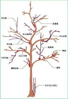 Wondering How Bonsai Trees Are Made? Bonsai Pruning, Bonsai Plants, Bonsai Garden, Garden Trees, Jade Bonsai, Bonsai Wire, Japanese Plants, Japanese Tree, Bonsai Tree Care