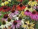 Growing Calendar - Burpee's Home Garden Advice, When to Grow, Sow, Plant and Harvest atBurpee.com