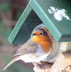 robin has found the peanut butter by jac hendrix on Flickr.