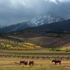 Rocky Mountain Horses - Mountain photography by Aaron Spong