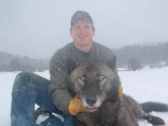 040412 wolf trapping 2