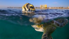 Our Favorite Finalists from Smithsonian's Annual Photo Contest