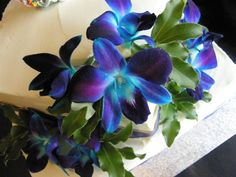 Blue orchids Orchid Wedding Cake, Wedding Cakes, Blue Orchids, Orchidaceae, Tattos, Perennials, Planting Flowers, Tattoo Ideas, Exotic