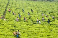 Fairtrade te Fair Trade, Trail, Led, Fair Trade Fashion