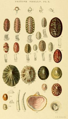 Early Scientific Illustration(Naturalists) on Pinterest | Insects ...