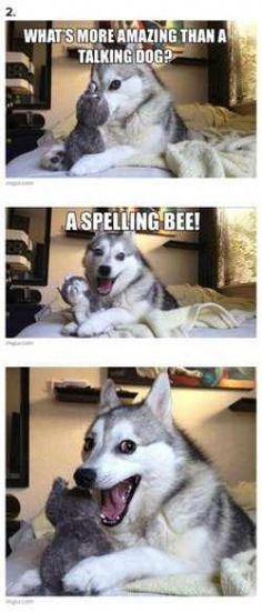 7 Pun Dog Puns That Will Instantly Brighten Your Day! - Funny Text - - 7 Pun Dog Puns That Will Instantly Brighten Your Day! The post 7 Pun Dog Puns That Will Instantly Brighten Your Day! appeared first on Gag Dad. Husky Humor, Funny Husky Meme, Funny Dog Jokes, Funny Animal Quotes, Crazy Funny Memes, Funny Animal Pictures, Funny Dogs, Pun Husky, Relationship Tips