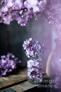 Lilac blossom in a country house setting, vintage styled photo, available as canvas print and royalty free image, by Svetlana Imagineisle.  The photo is vintage styled with added grain/noise to enhance the effect. #Lilac #LilacBlossom #PurplePassion #SpringBlossom #Flowers #ArtForWalls #ArtForHome #HomeDecor #CanvsPrint #RoyaltyFreeImage #FramedPrint