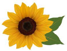 sunflower clipart png image sz h rja pinterest sunflowers rh pinterest com sunflower clip art free sunflower clip art free printable