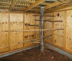 5 Acres & A Dream: Chicken Coop: Walls, Windows, Floor, Roost