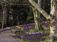 Gothenburg Gothenburg, Outdoor Furniture, Outdoor Decor, Park, Plants, Home Decor, Decoration Home, Room Decor, Parks