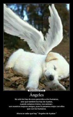 Frases De Adiós Para Mi Mascota Dios Dogs Pets I Love Dogs