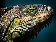 OUR CREATORS MOSAIC ART by KAREN WILES http://karen-wiles.artistwebsites.com Amazing Wildlife Photography