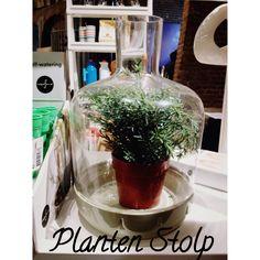 Planten stolp
