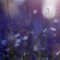 Morning Flowers 2 by ~Vierasaine