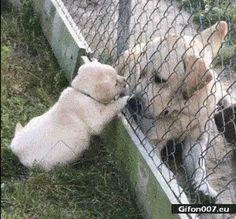 Gif 760 Dog Fence, Funny Gifs, Cute Dogs, Fails, Funny Animals, Labrador Retriever, Self, Labrador Retrievers, Make Mistakes