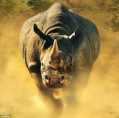 The Prince is determined to raise awareness of a crisis which is robbing Southern Africa of thousands of black rhino each year