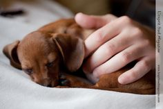 hounddogsrunning:  Sleeping in daddy's hand