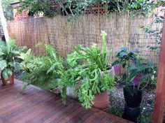 Plants around deck