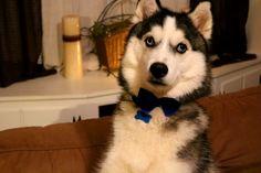 My handsome pup. http://ift.tt/2kgmEGH