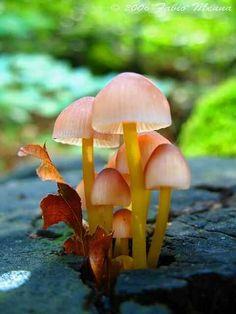Mushrooms ️More Pins Like This At #FOSTERGINGER @ Pinterest️