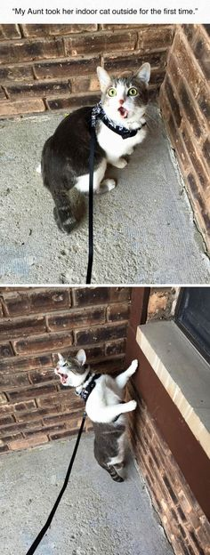 Indoor Cat Outside For The First Time funny cute cat cats adorable kitten hilarious funny pictures funny cats funny images