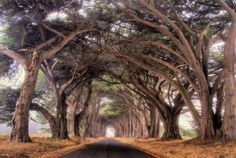 Most People Don't Know Northern California Has A Tunnel Of Trees And It's Enchanting