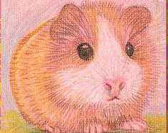 Guinea Pig - Miniature art. Original small coloured pencil drawing of a guinea pig; all proceeds to charity.