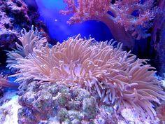 Coral, Cay, Aquarium, Sea, Reef