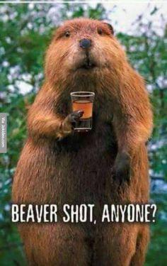 Beaver shot - http://www.jokideo.com/