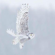 Funny Owls, Bird, Animals, Animales, Animaux, Birds, Animal, Birdwatching, Animais