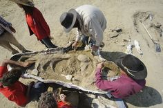 A Dutch museum has announced that scientists searching for a fossil of Tyrannosaurus rex have finally found their quarry on a ranch in eastern Montana. Salzburg, Montana Ranch, Oral History, Tyrannosaurus Rex, National Archives, T Rex, The Past, Museum, Pictures