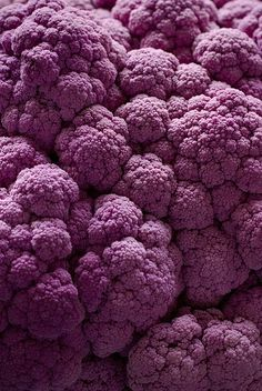 purple food photography with califlower Patterns In Nature, Textures Patterns, Nature Pattern, Palette Pastel, Purple Cauliflower, Foto Macro, Purple Food, Purple Art, Fractals