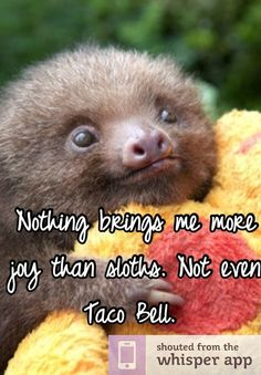 This list has nothing to do with the deadly sin of sloth, here you'll only find cute pictures of sloths, to brighten your day, and remind you to take it easy and relax a little, like the sloths do. This list has nothing to do with the deadly sin of Cute Baby Sloths, Cute Sloth, Cute Baby Animals, Funny Animals, Baby Otters, Wild Animals, Pictures Of Sloths, Animal Pictures, Beautiful Creatures