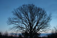 Evening shot of one of our many trees on our property #lifeisgood:)