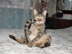 Crazy Cat Eyes - funnycatsite.com