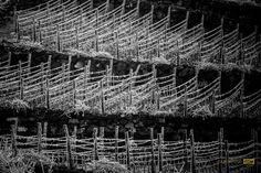 Somló-hill Volcano, Hungary, Wines, City Photo, Volcanoes
