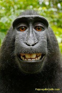 Foto di animali insoliti (26 foto). Foto 19