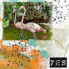 Say Yes to Flamingos